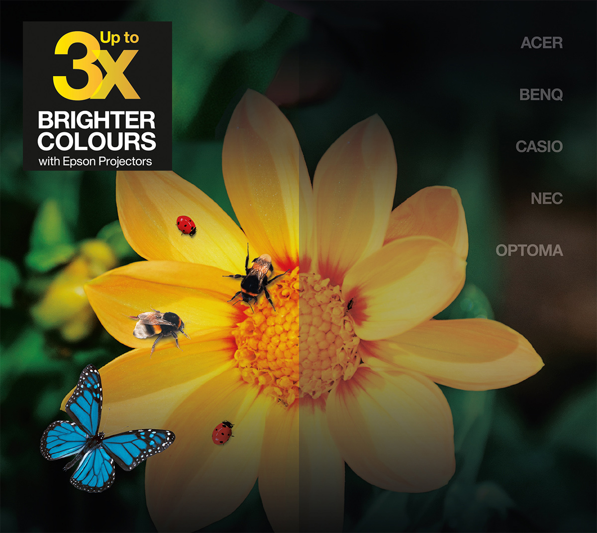 Epson Color Brightness | Jämförelse av Epson-projektorer med andra tillverkare